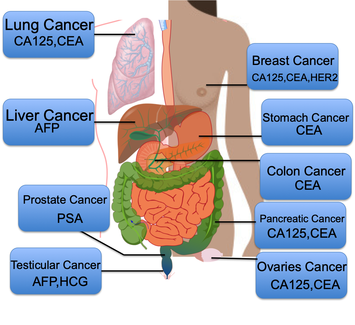 What are tumor markers